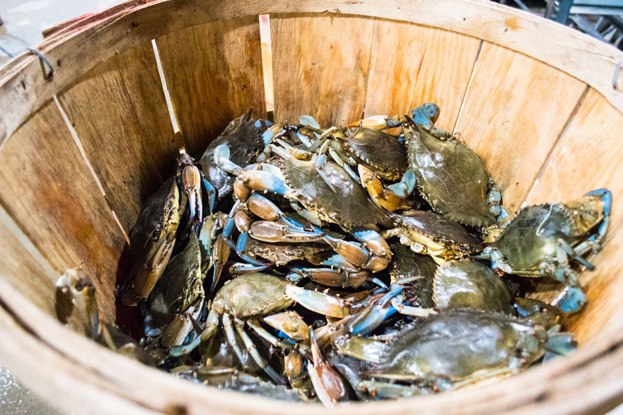 crabs from seaview crab company